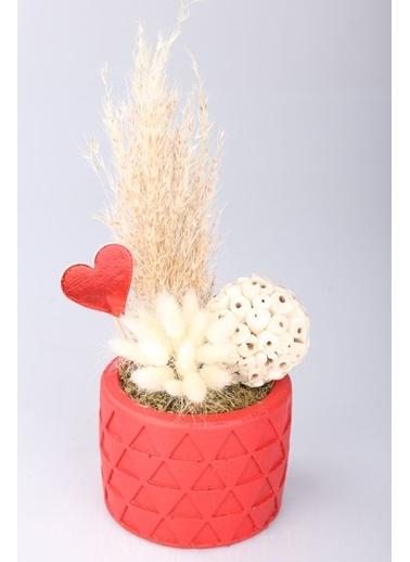 Kibrithane Çiçek Yapay Çiçek Beton Saksı Kuru Çiçek Aranjman Kc00200738 Renkli